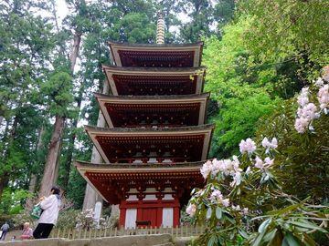 室生寺のシャクナゲ.jpg